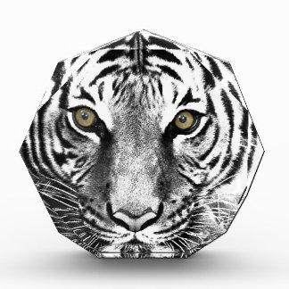 Tiger's Glare Awards
