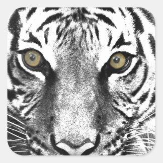 Tiger's Glare Square Sticker