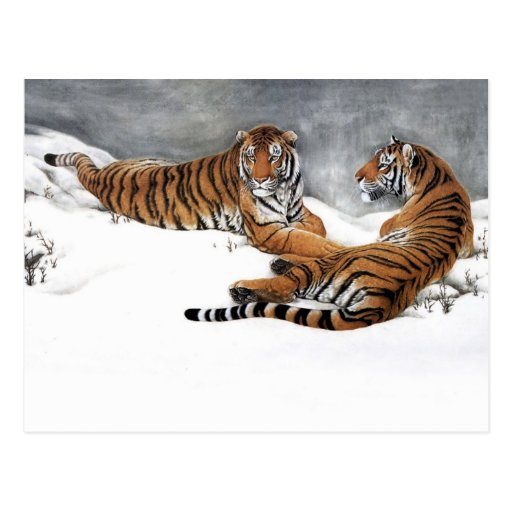 Tigers in the snow, Classical Chinese Art Post Cards