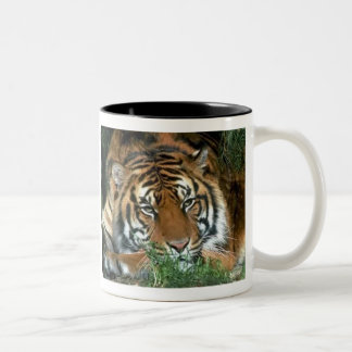 Tigers in the Wild Photos on Cards, Tees, Gifts Two-Tone Coffee Mug