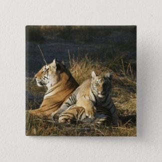 Tigers (Panthera tigris) cub lying on his Button