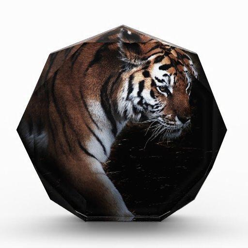Tigers search award