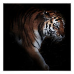 Tigers search poster