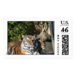 Tigers Together Postage Stamps