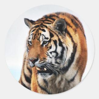 Tigers wild life classic round sticker