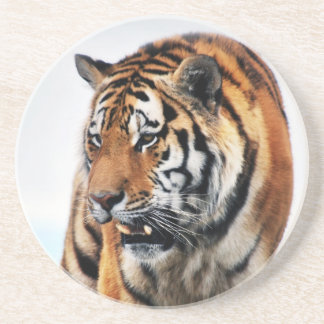Tigers wild life drink coaster