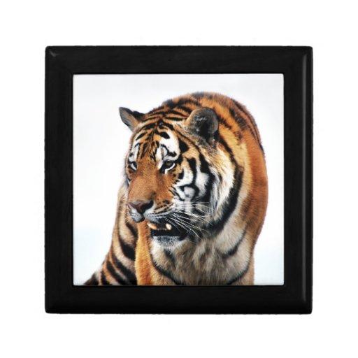 Tigers wild life trinket box