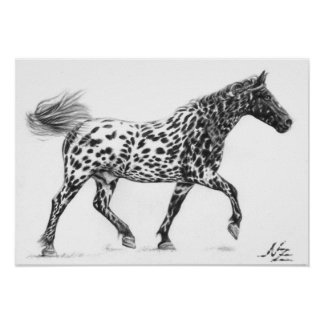 Tigerschecke - Painted Horse Póster