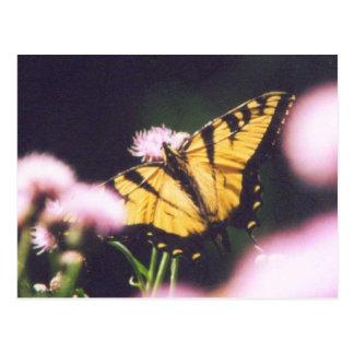 TigerSwallowtail Postcard