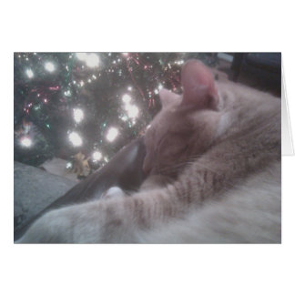Tigger Cat Christmas Card