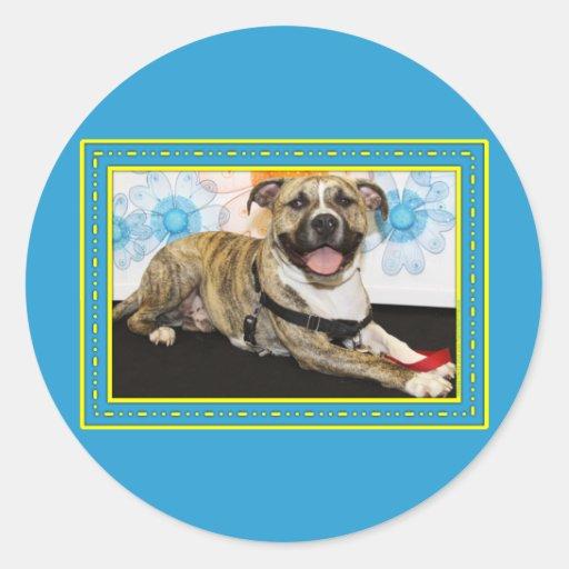 Tigger - Pitbull Stickers