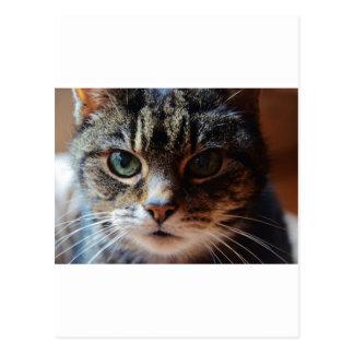 Tiggy. Postcard
