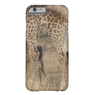 Tight crop of two Giraffes (Giraffa Barely There iPhone 6 Case