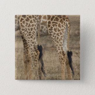 Tight crop of two Giraffes (Giraffa Button