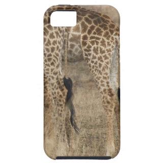 Tight crop of two Giraffes (Giraffa iPhone SE/5/5s Case