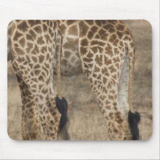 Tight crop of two Giraffes (Giraffa Mouse Pad