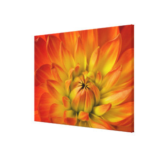 Tight in photographs of Dalhia flower with the 2 Canvas Print