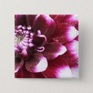 Tight in photographs of Dalhia flower with the Button