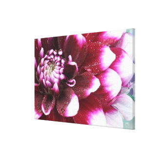 Tight in photographs of Dalhia flower with the Canvas Print