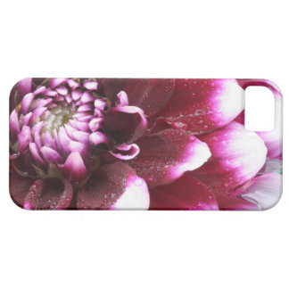 Tight in photographs of Dalhia flower with the iPhone 5 Cases