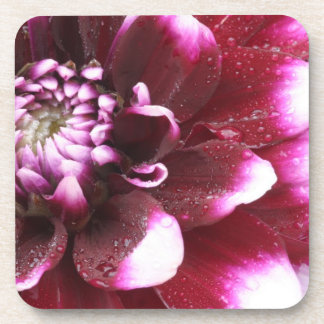 Tight in photographs of Dalhia flower with the Drink Coaster