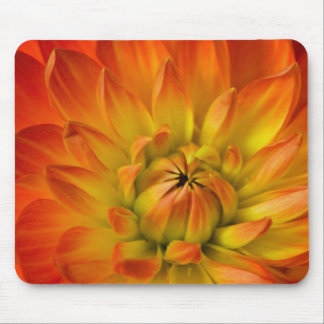 Tight in photographs of Dalhia flower with the Mouse Pad