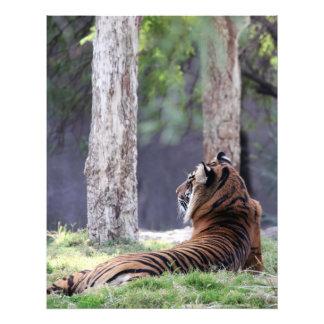 Tigre 01