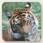 Tigre 012 posavaso