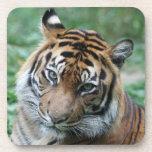 Tigre 013 posavasos
