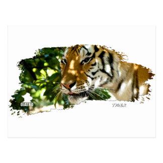 Tigre 01 postales