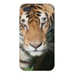Tigre 2 iPhone 4 cobertura