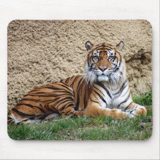 tigre 7 del sumatran alfombrillas de ratones