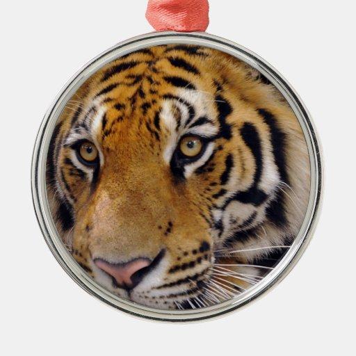 Tigre Adorno De Reyes