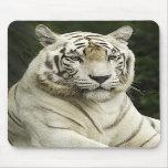 tigre alfombrillas de ratón
