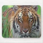 Tigre Alfombrillas De Raton