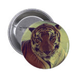 Tigre anaranjado pin