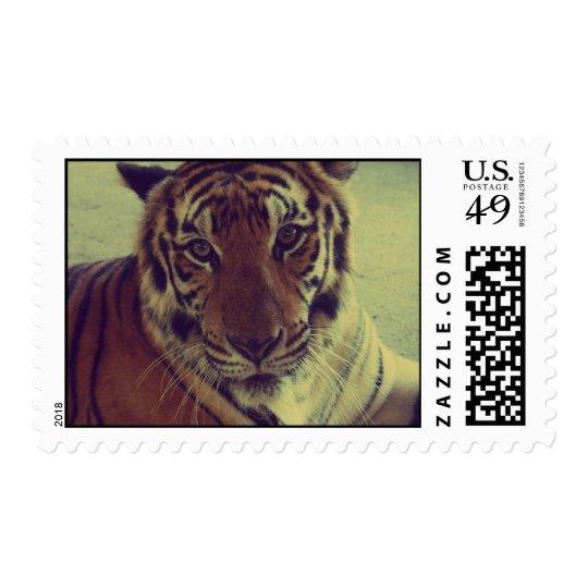 Tigre anaranjado sellos