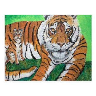¡Tigre - aquí le está mirando! Postal