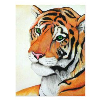 Tigre - arte de Kimberly Turnbull (W/C lápices) Tarjetas Postales