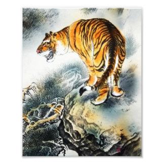 Tigre asiático cojinete
