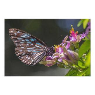Tigre azul, flor rosada cojinete