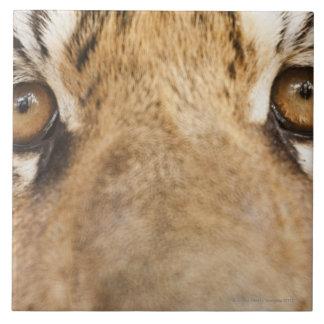 Tigre Azulejo Cuadrado Grande
