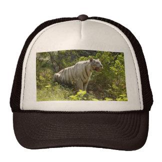 Tigre blanco 007 gorras
