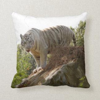 Tigre blanco 013 almohada