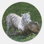 Tigre blanco 015 pegatina