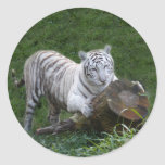 Tigre blanco 015 pegatina redonda