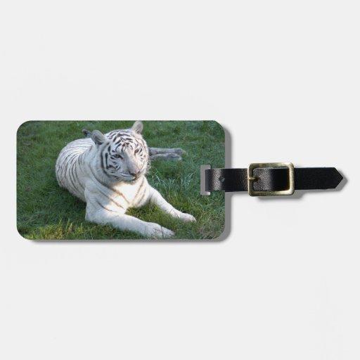 Tigre blanco 017 etiqueta para maleta