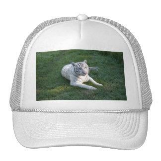 Tigre blanco 017 gorro