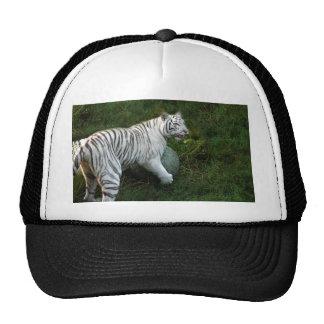 Tigre blanco 019 gorras de camionero