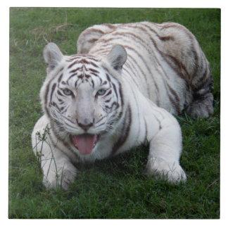 tigre blanco 1 9x9 azulejo cuadrado grande